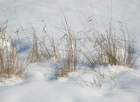 Snow, Grass, Landscape, Winter, Field, Nature, Cold