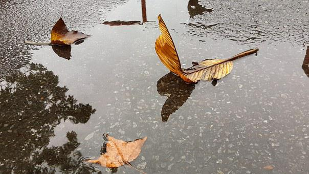 Foliage, It's Raining, Mood