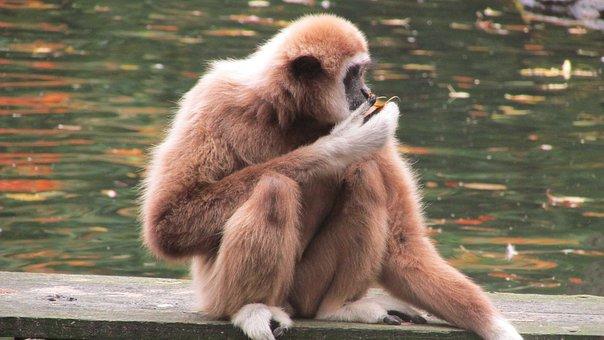 Monkey, Wuppertal, Zoo, Strength Lings