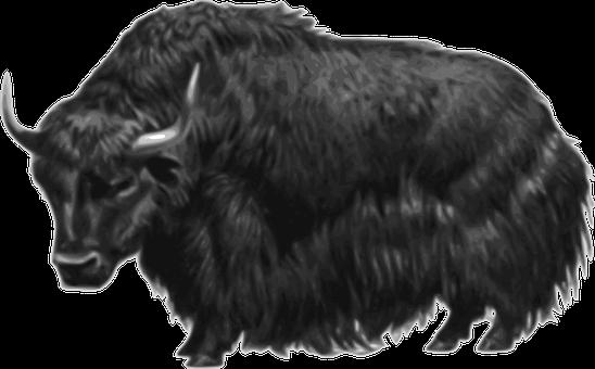 Animal, Hairy, Horned, Horns, Livestock, Mountain