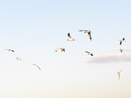 Seagulls, Flying, Spring, Sky, Clouds, Bird, Freedom