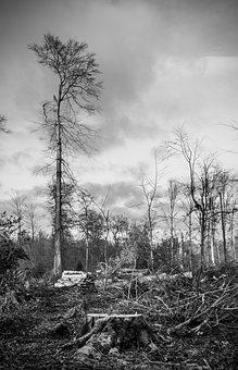 Storm Damage, Forest, Devastation, Landscape