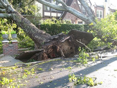 Tree, Uprooted, Tornado, Winds, Damage, Storm, Disaster