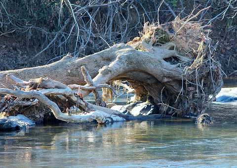 Storm Damage, Fallen Tree, Uprooted, Driftwood, Creek