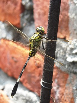 Dragonfly, Green, Black, Wire, Wall