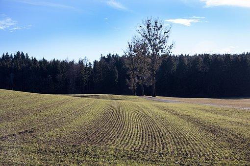 Landscape, Arable, Spring, Earth, Green, Frisch, Series