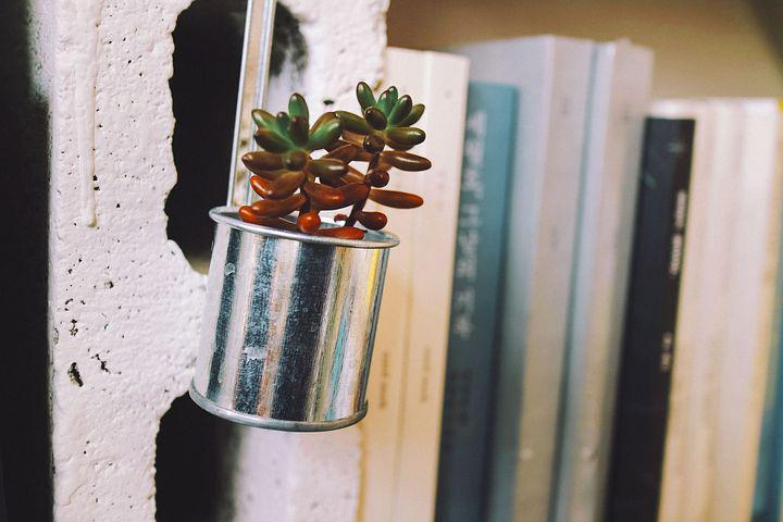 Plants, Cactus, Potted Plant, Book, Bookstore S