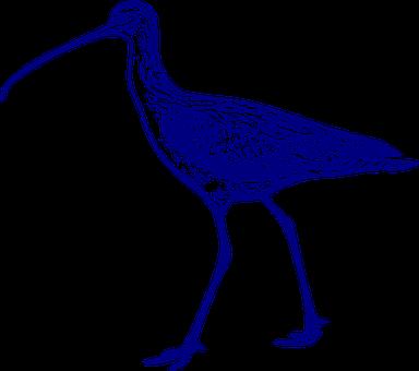 Curlew, Bird, Animal, Walking