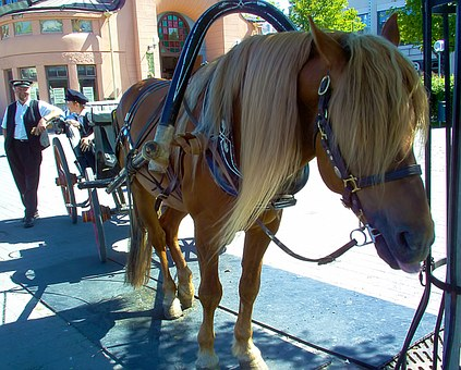 Horse, Animal, Carriage, Kuopio, Finnish