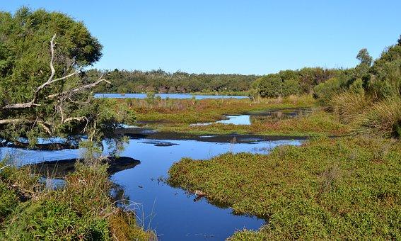 Lake, Water, Landscape, Scenic, Weeds, Aquatic