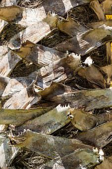 Palm, Bark, Tribe, Palm Tree Root, Structure, Section