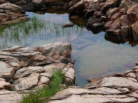 Pool, Water, Rocks, Nature, Weeds, Vegetation, Aquatic