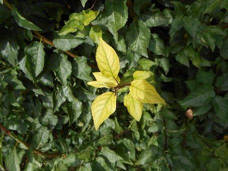 Leaf, Green, Bush, Aesthetic, Leaves, Green Leaf, Plant