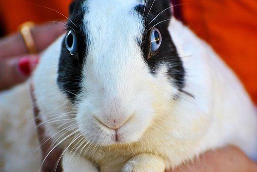 Rabbit, White, Black, Hare, Bunny, Animal, Animals