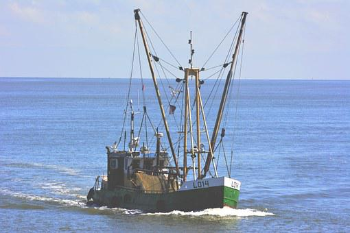 Boat, Fish, Cutter, Catching, Water, Ocean, Sea, Ship