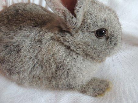 Rabbit, View, Eye, Ear, Fousky, Face, Gray, Fur, Smooth