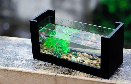Fresh, Aquarium, Fish, Aquarium Plant