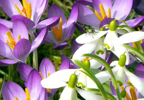 Flowers, Flower, Nature, Plant, Spring, Blossom, Bloom