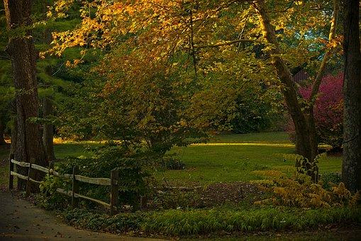 Golden Hour, Fall, Autumn, Nature, Season, Foliage