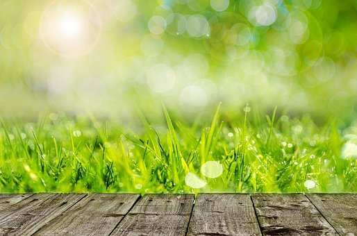 Background, Green, Gardening, Spring, Wood, Grass, Farm