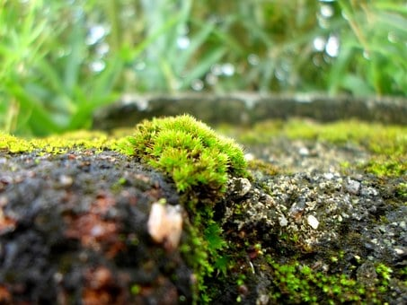 Green, Mosses, Walls, Damp, Surfaces, Growths, Tiny