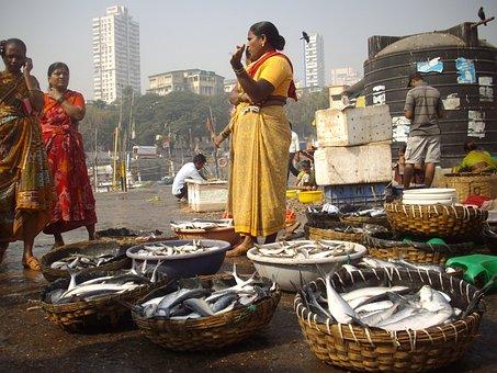 Fish, Auction, Docks, Sassoon, Mumbai, Typical, Famous