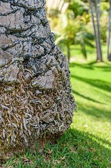 Palm, Tribe, Plant, Close, Section, Palm Tree Root