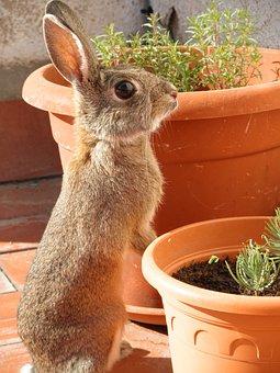 Rabbit, Bunny, Cute, Pet, Portrait, Curious, Standing