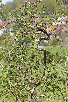 Nature, Plant, Vortex Grew, Ornamental Plant