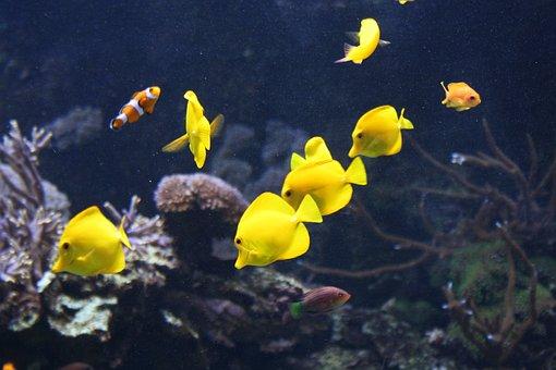 Fish, Yellow, Water, Nature, Animal, Underwater