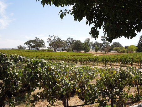 Vineyards, Wine Country, Vineyard, Viticulture
