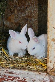 Rabbit, Young Rabbits, White, Albino, Fur, Stall