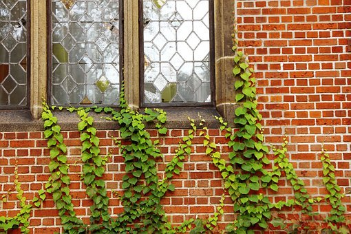 Windows, Walls, Ivy, Plants, Vines, Climbing, Climbers