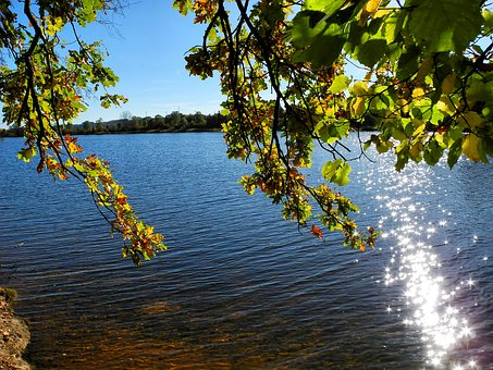 Lake, Nature, Water, Reservoir, Landscape, Saarland