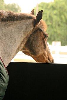 Horse, Stall, Looking, Head, Animal, Mammal, Barn