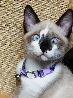 Gata, Cat, Kitten, Animal, Linda, Pet, Animals, Feline