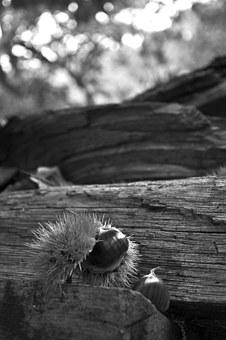 Chestnut, Wood, Black, White, Chestnuts Hedgehog