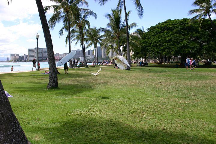 Honolulu, Beach, Hawaii, Park, Gull, Holiday