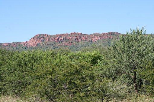 Plateau, Scrub, Brushwood, Undergrowth, Landscape