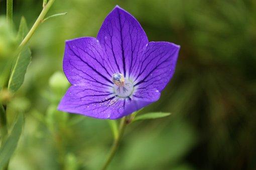 Behold, Flowers, Affix, Plants, Nature, Makro