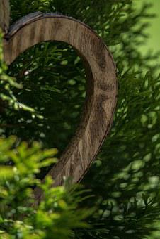 Green, Wood, Half Wood Heart, Tree Of Life, Plant