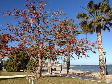 Spring On A Beach, Beech, Red Leaves, Nature, Beach