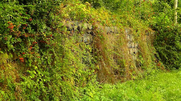 Hedge, Wild Hedge, Wall, Stones, Stone Wall, Leaves