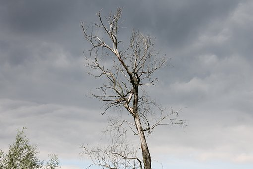 Dark, Tree, Sky, Nature, The Background, Landscape