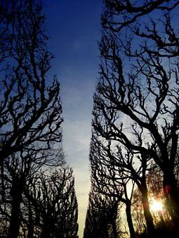 Creative, Sun, Trees, Winter, Patch, Road, Sunny