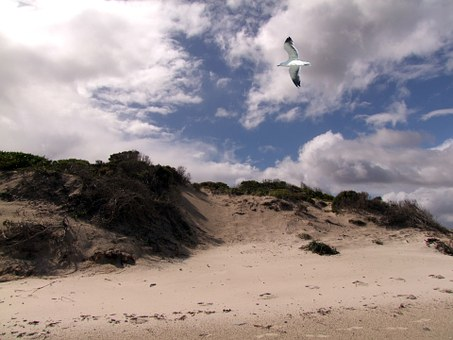 Dunes, Seagull, Gulls, Landscape, By The Sea, Booked