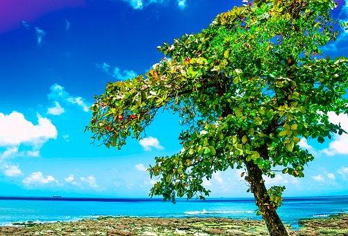 Fortaleza, America, Summer, Beach, Day, Nature, City