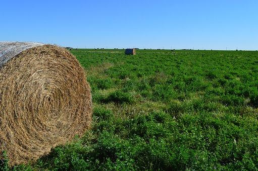 Hay Bale, Haystack, Nature, Prairie, Harvest, Straw