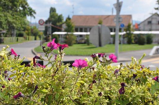 Geneva, Village, Laconnex, Flowers, Floral, Plants