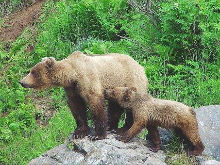 Bear, Cub, Alaska, Mother, Animal, Nature, Wild